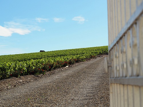 Burgunder Beaujolais Zufahrt Weingut