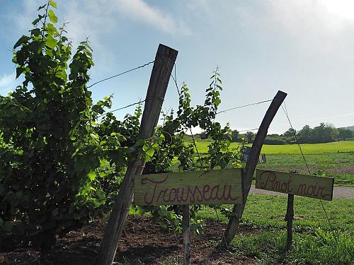 Weinbücher Priewe Wein Die große Schule Rebsorten