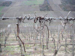 Die Preise pro verkauftem Liter Wein lagen 2014 in Deutschland im statistischen Durchschnitt bei 2,89 Euro.