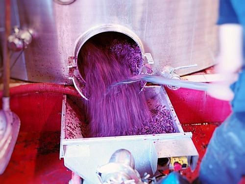 ulkige Arbeiten im Weingut, Schalen der Trauben aus dem Edelstahltank schaffen