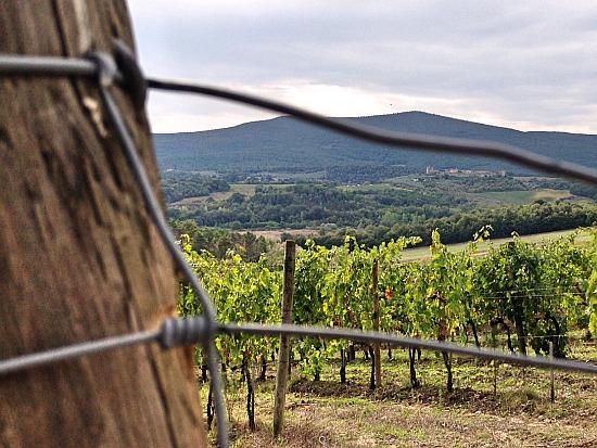 Weinbau in der Bibel, vieles wird auch in der Gegenwart praktiziert