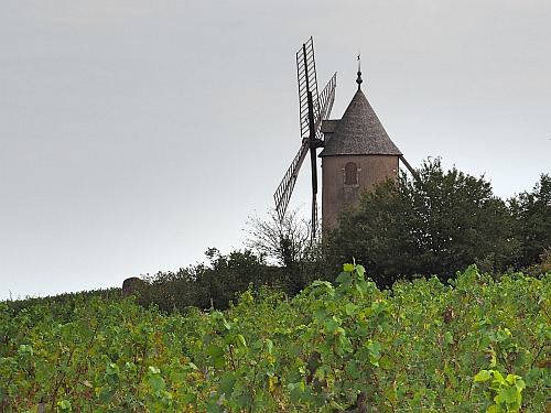 Weinbücher Terroir Moulin à Vent