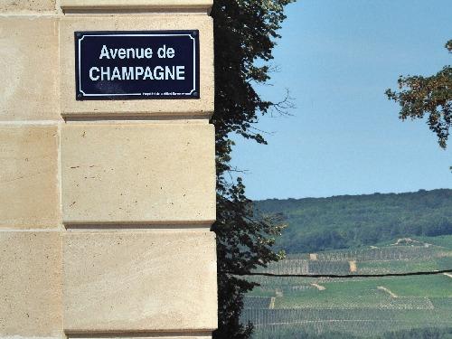 Champagne Epernay Reben