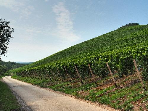 Wein Statistik 2018 Riesling