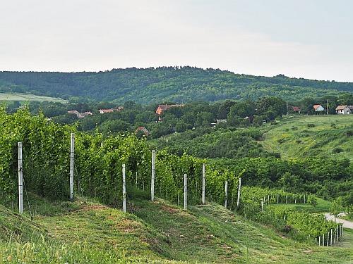 Fruška Gora Vojvodina Wein Serbien
