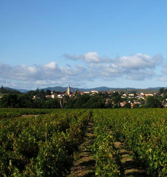 Kuriose Weingesetze beaujolais burgund bourgogne rouge
