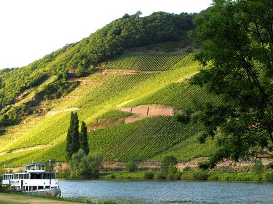 Kuriose Weingesetze mosel saar ruwer umbenennung