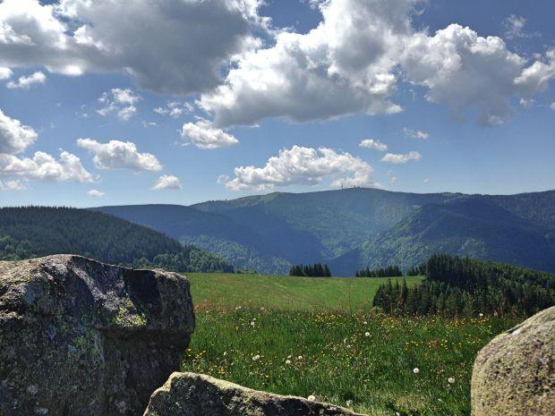 Badischer Spätburgunder Schwarzwald