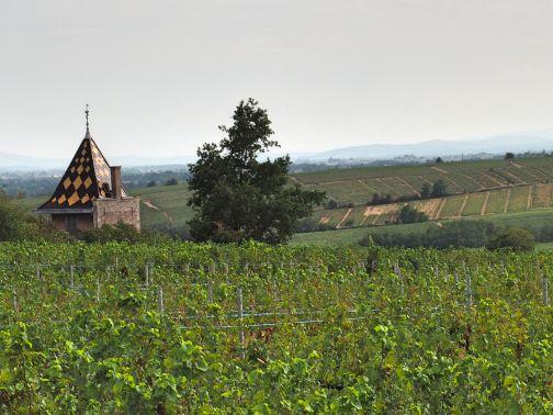 Beaujolais Weinreben Fernblick