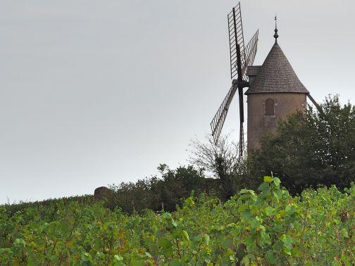 Windmuehle moulin-à-vent Wein Anbaugebiet