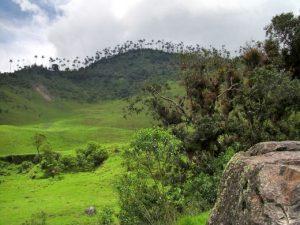 Wald zwei Schichten Kolumbien Laubbäume Palmen