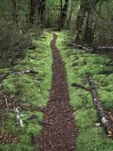 Waldweg Pfad Stämme grün