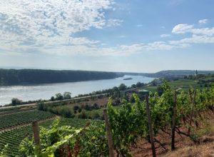 Statistische Angaben zum Wein Rheinhessen