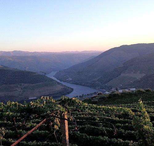 Douro Pinhao Weinbau Portugal