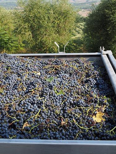 Labor Weingut Trauben Reife