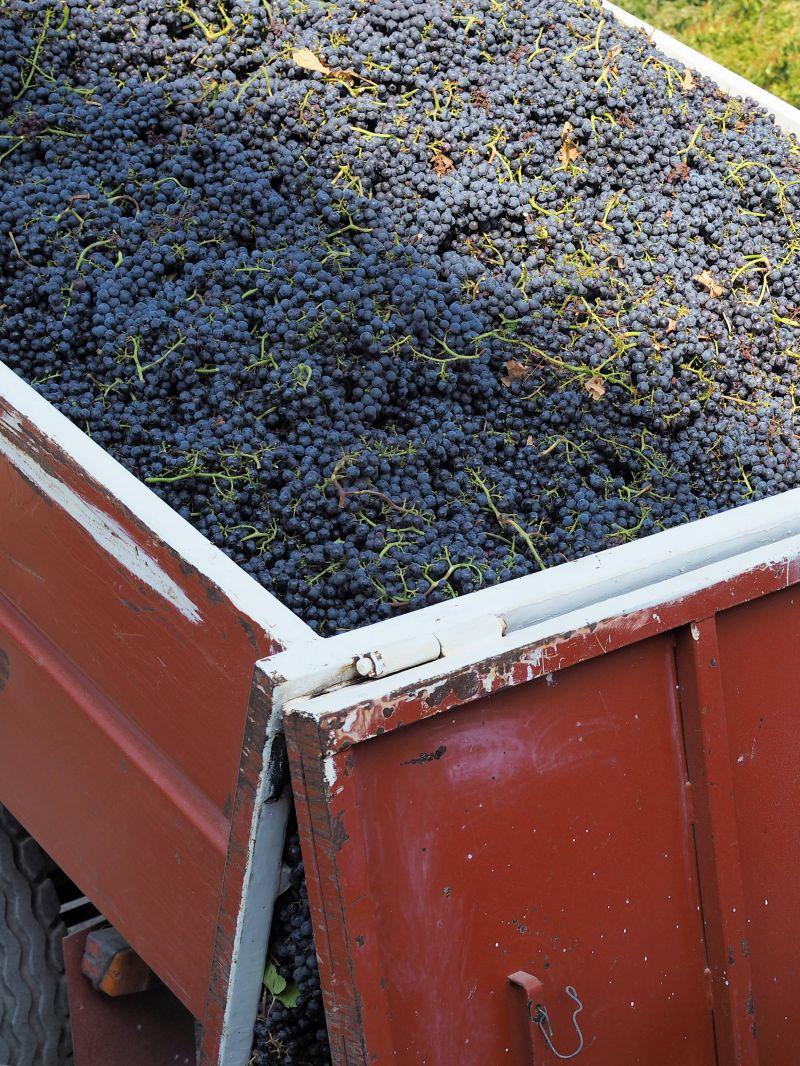 Skript Wein Filmfehler vermeiden Experte