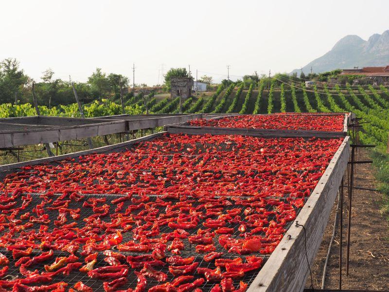 Albanien getrocknete Tomaten